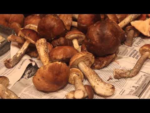 Правила сушки грибов. Подберёзовики.