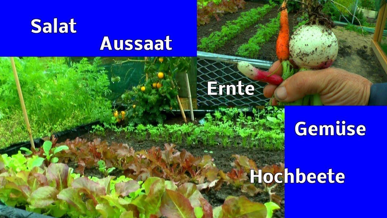 Salat Aussaat Im Herbst Beet Vorbereitung Dungen Und Versorgung