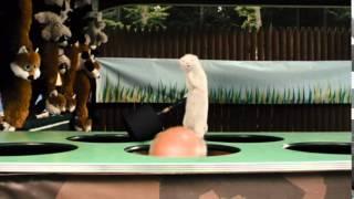 ТНТ-Комедия - 4 комедии о том, как животные отстаивают свои права