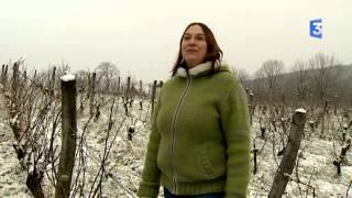 SIA 2015 : Jura : la transmission d'exploitation agricole en viticulture