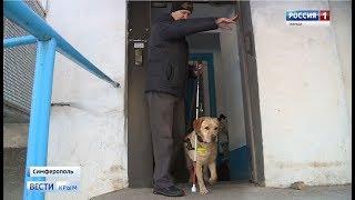 ВестиКрым.рф// В Крыму появилась первая «дипломированная» собака-поводырь