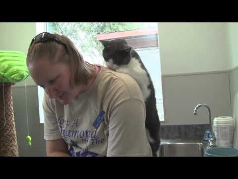 Banks the cat gives woman a back massage