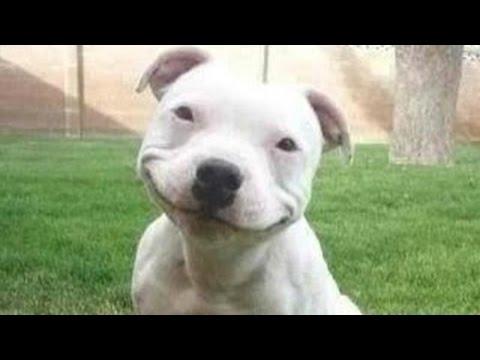 recopilacion de los perros mas graciosos que hayas visto