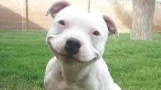 recopilacion de los perros mas graciosos que hayas...