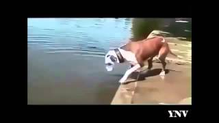 Free Funny Videos 43  Funny video clips fail compilation   Funny Animal Videos