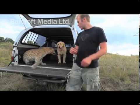 Leopard A Pes Jsou Nejlepší Přátelé!