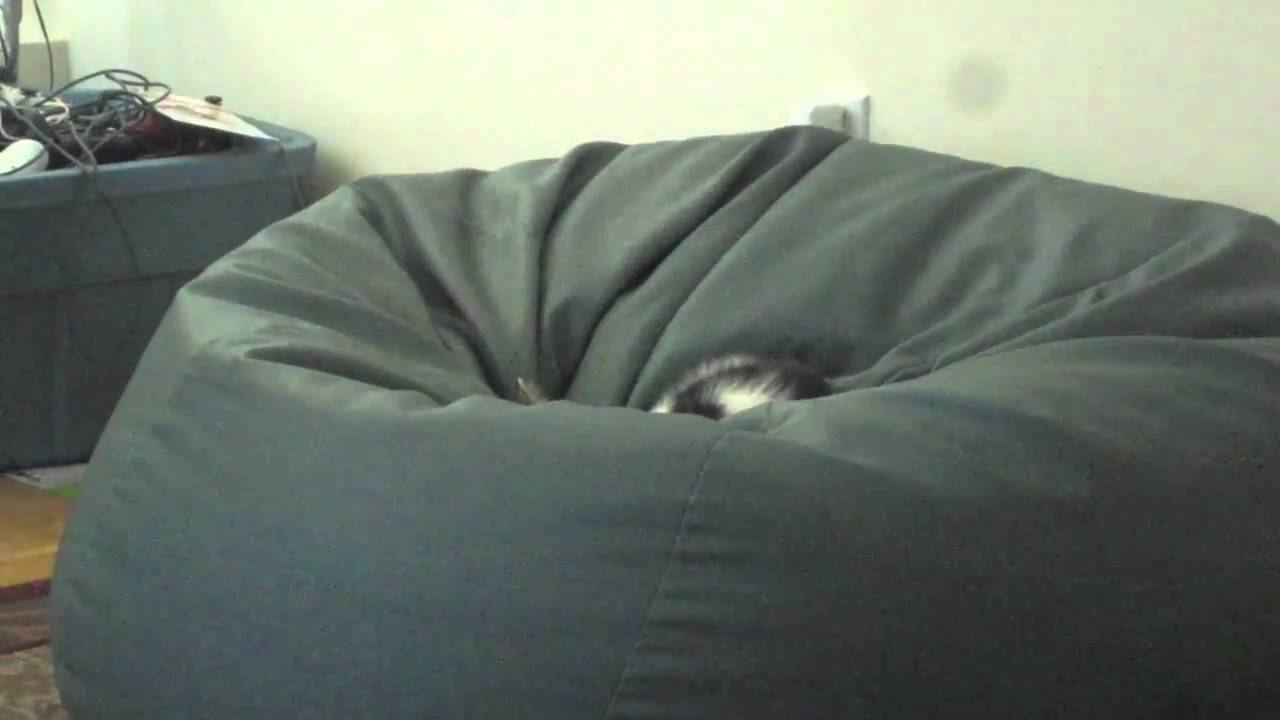 Cat In A Beanbag Chair