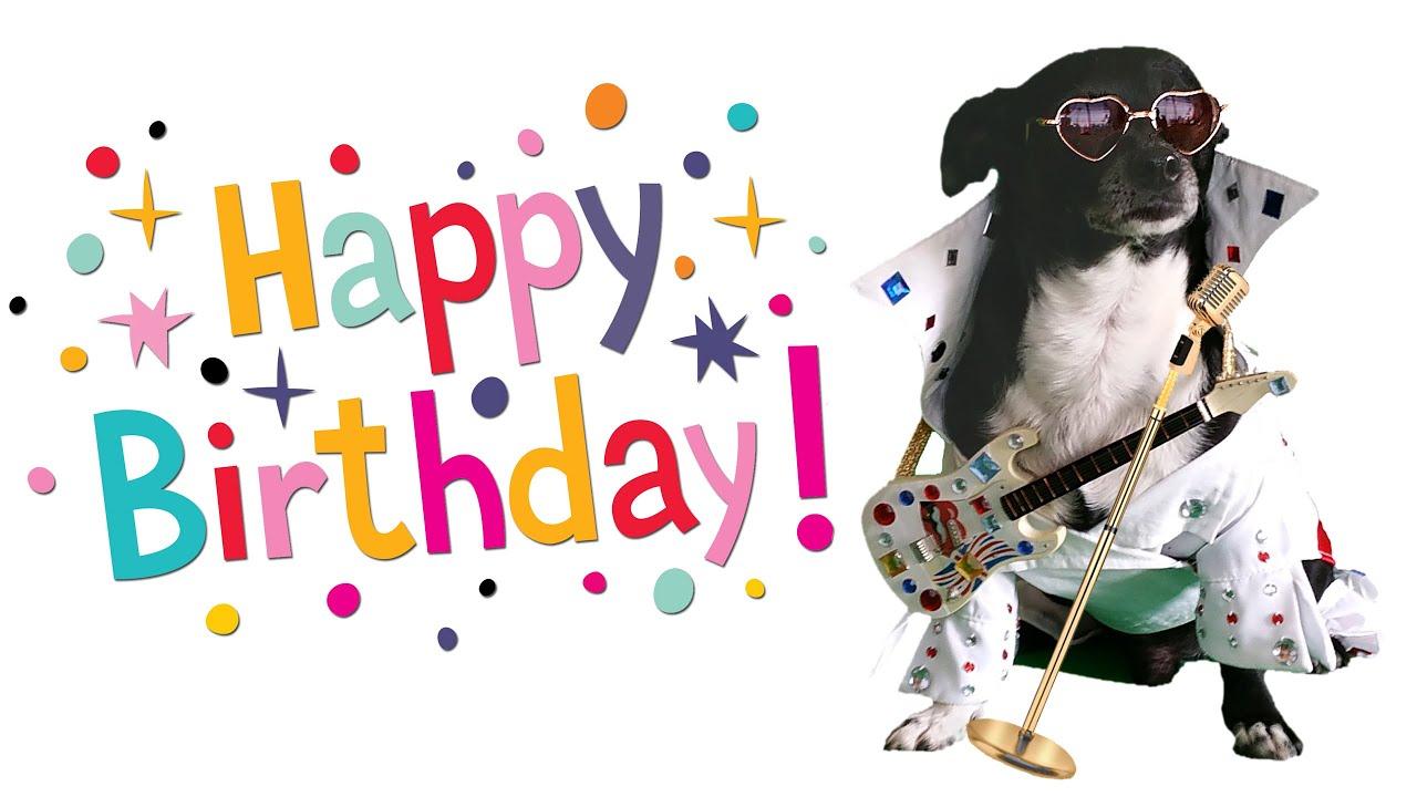 Happy Birthday Song Funny Dog Sings Like Elvis Youtube