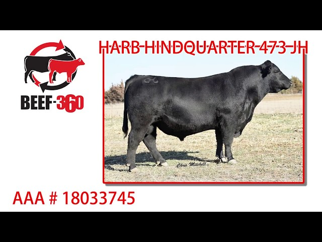 Beef 360 - HARB HINDQUARTER 473 JH