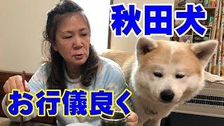 秋田犬はげんきです 今日のそうすけ君 大好きなベーコン、かまぼこ 食べ...