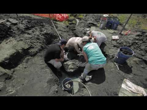 Rowan University Fossil Park: Unearthing an ancient croc