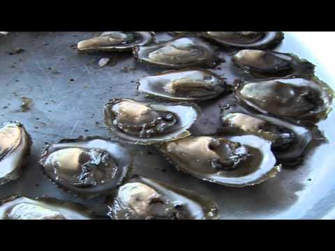 REPORTAŽA O STONU -  Festival of Oysters - Dani Kamenica u Malom Stonu