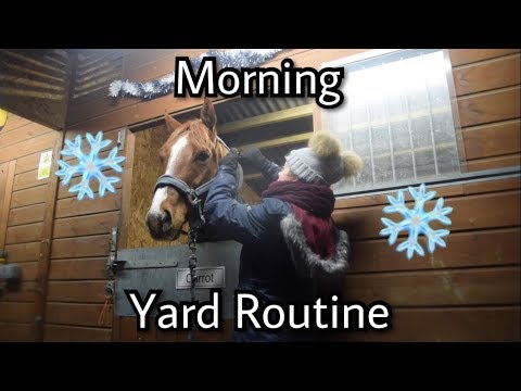 Morning Yard Routine