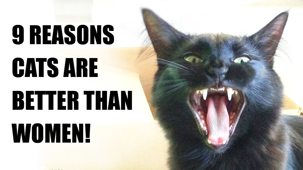 9 Reasons Cats Are Better Than Women! - YouTube