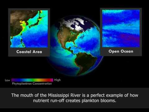 NOAA: The Dead Zone