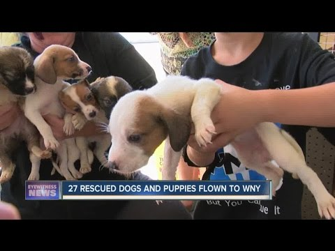 27 dogs and puppies flown to WNY