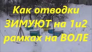 🐝Зимовка отводков на 1 и 2 рамках на улице 👈Проверил не поверил👍 Зимовка пчел