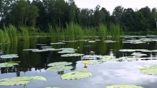 видео День рыбака