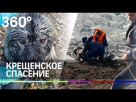 В Раменском спасли пса, который провалился под лёд