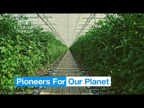 Farmers in the Netherlands are growing more food using less resources | Pioneers for Our Planet