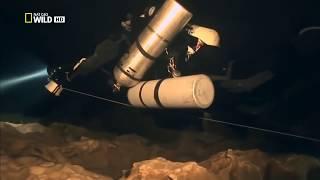 видео Эвкалиптовые леса у моря