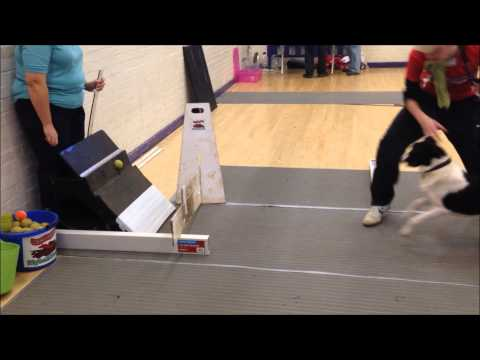 High Flyers Flyball Training - January 2014
