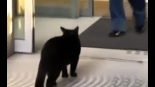 Cats attempt to get into Japanese museum for two years | CCTV English