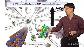 William Shih (Harvard) Part 3: DNA-Nanostructure Tools