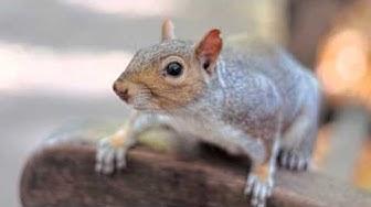 Rodent Control | Scottsdale, AZ -- Alliance Pest Management