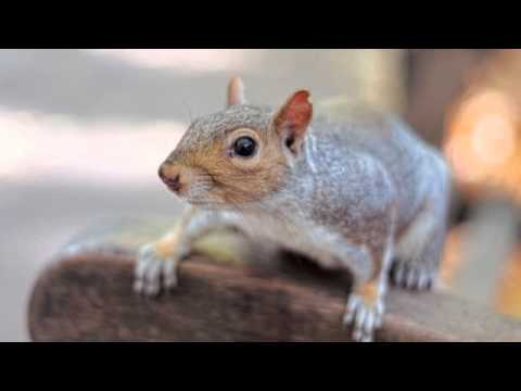 Rodent Control | Scottsdale, AZ -- Alliance Pest Management