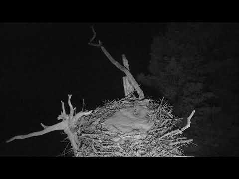Audubon Osprey Nest Cam 03-16-2018 16:29:06 - 17:29:07