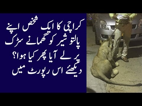 Lion on Karachi's streets Shakes Social Media of Pakistan
