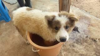 สุดยอด สุนัข อาบน้ำ บางมุม บางแก้ว