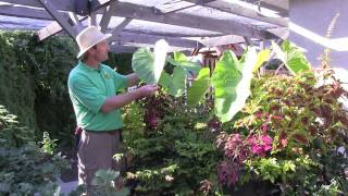 Outdoor Tropical Plants: Part 4