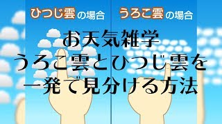 【お天気雑学】うろこ雲とひつじ雲を一発で見分ける方法
