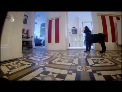 Hidden Camera: Dogs' Howling when they are left alone at home
