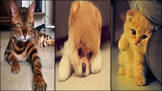 Most Popular Dog and Cat Names of 2018 | New Trending 🐕 🐈