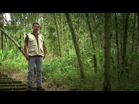 Cultivo de Guadua y su aprovechamiento Artesanal - TvAgro por Juan Gonzalo Angel