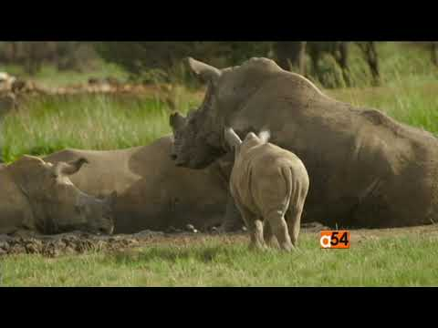 'Trophy' Documentary On Big-Game Hunting