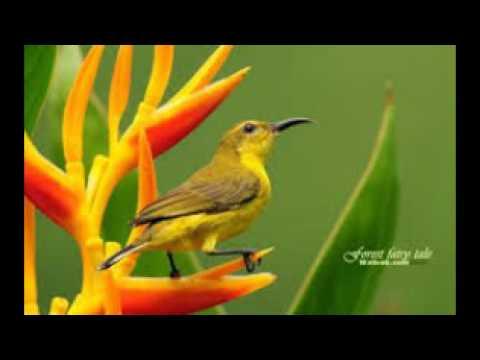 Animals Wallpapers   Birds Wallpapers   HD Desktop Backgrounds