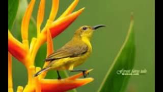 Animals Wallpapers | Birds Wallpapers | HD Desktop Backgrounds