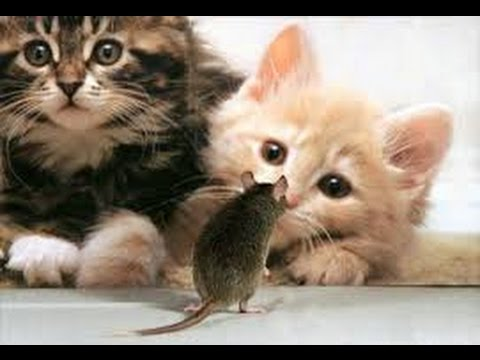 videos of silly cats   Funny Videos USA    Crazy Funny Video