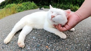 警戒心が強い白猫軍団、逃げ遅れた一匹をモフりまくる