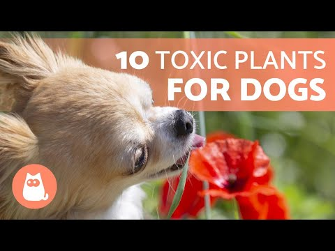 10 TOXIC PLANTS For DOGS And Their Effects 🐶 ❌ 🌷