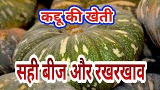 कद्दू की खेती कैसे करें और कब करें और सही बीज का चुनाव,pumpkin farming,