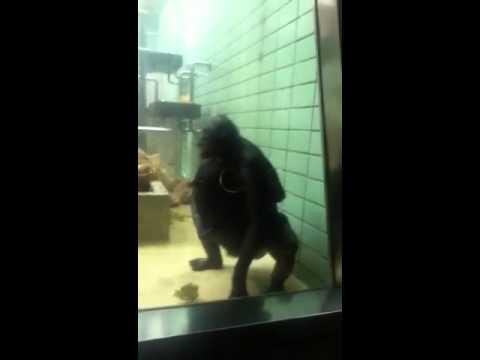 Fickende Affen