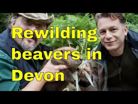 Beavers and re-wildling in Devon - Peter Smith, George Monbiot. Ft' Chris Packham.