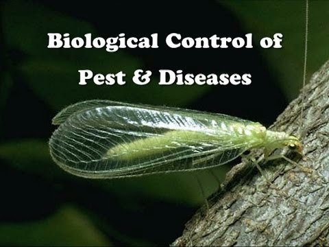 Biological Control of Pest & Diseases