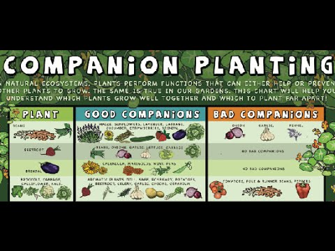 What Is Companion Planting, Food Forest Examples.