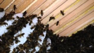 Unsere Bienen Am 6.6.2015
